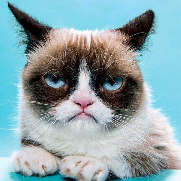 Grumpy Cat, Youtube, Twitter, Facebook, Как Грампи Кэт заработал $100 млн?