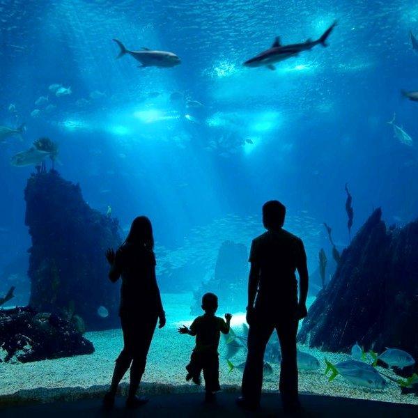 Путешествия, отдых, туризм, океан, вода, 10 самых больших аквариумов мира