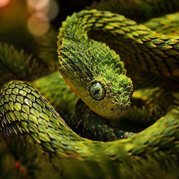 Исследование,биология,природа,животные,фауна,эволюция, Африканские гадюки могут становится невидимыми