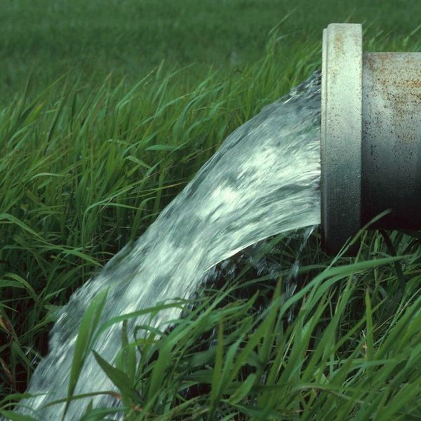 Природа, экология, вода, флора, фауна, здоровье, организм человека, С помощью амилоидных белков можно очищать воду и добывать золото