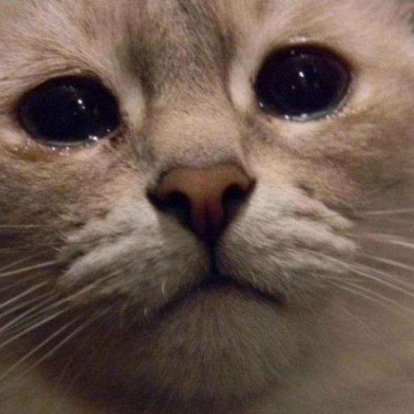 YouTube,видео,рецензия, «Она - вся его жизнь»: престарелая кошка вернулась к хозяину