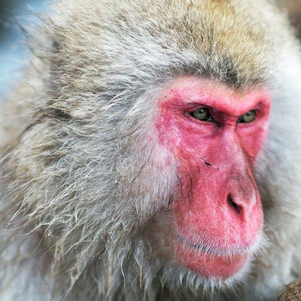 животные,природа,эволюция, Учёные назвали главное отличие людей от животных