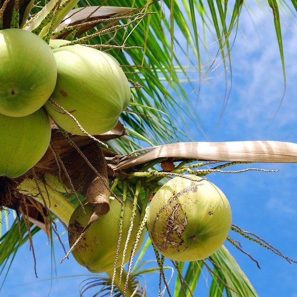 еда, здоровье, организм человека, Назван «самый вредный» из продуктов питания